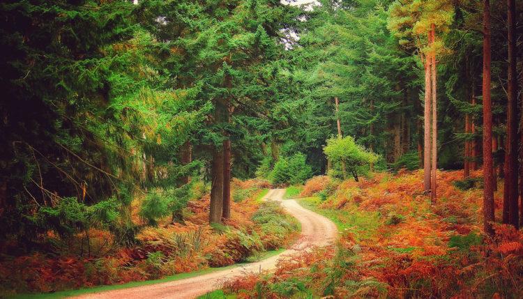 Национальный парк Новый Лес (Нью Форест), Англия