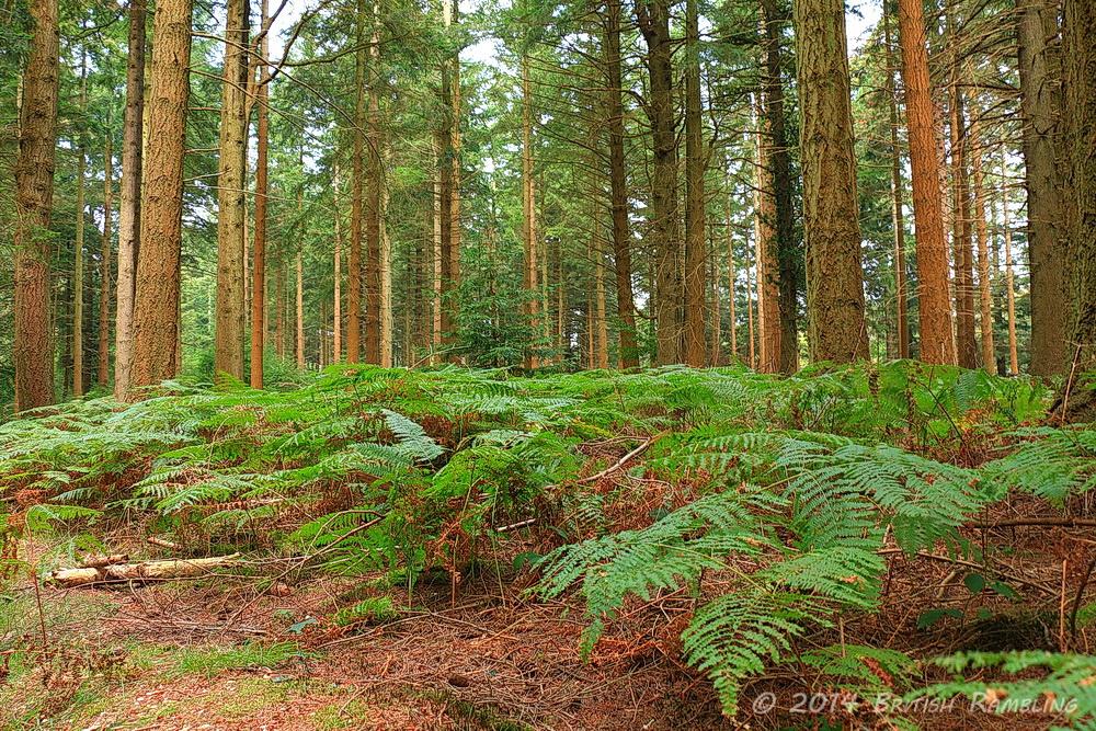 Фото жена в лесу ню фото 80-298