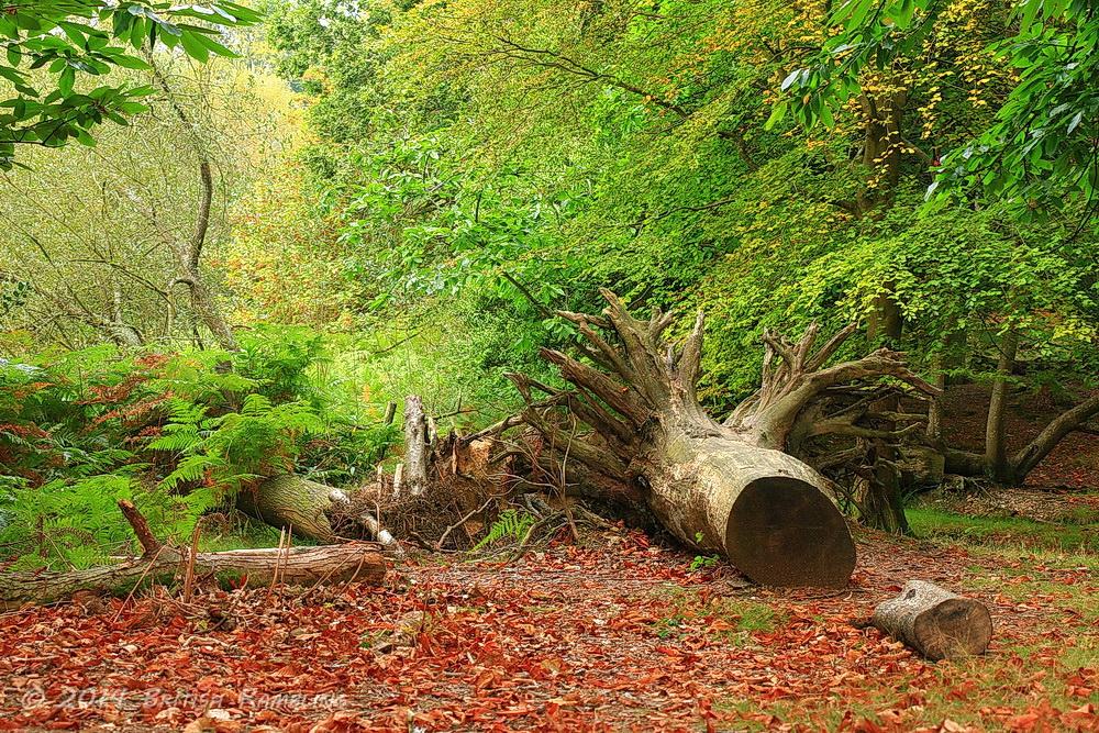 Заповедник Новый Лес, графство Хэмпшир