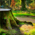 Национальный парк Новый Лес, графство Хэмпшир, Англия