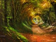 Древняя римская дорога в деревне Халнакер, Англия
