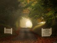 Утренний туман в долине реки Тест, графство Хэмпшир, Англия