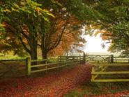 Осень в долине реки Тест, графство Хэмпшир, Англия